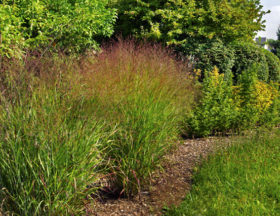Bamboo & Grasses Garden